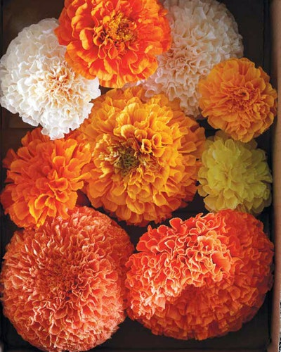Blommor av papper