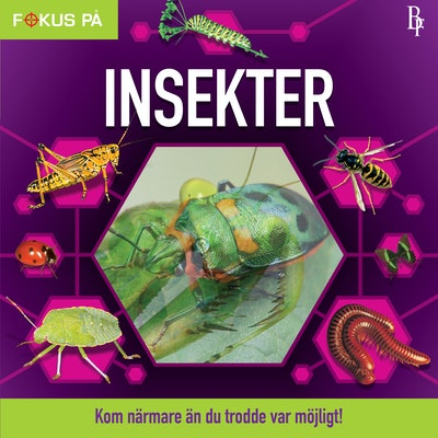Fokus på : Insekter