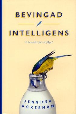 Bevingad intelligens : i huvudet på en fågel